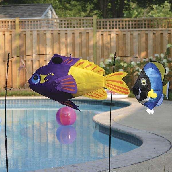 Swimming Fish - Fairy Basslet