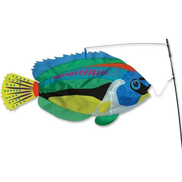 Swimming Fish - Peacock Wrasse